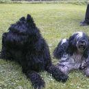 Moja največja prijateljica Čita iz Logarske doline.