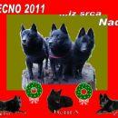 Srečno 2011
