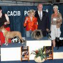 2006-06 CACIB Portorož, BIS veterani 3.