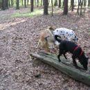 Johny & Jay & Žiža: tako se dela agility v praksi