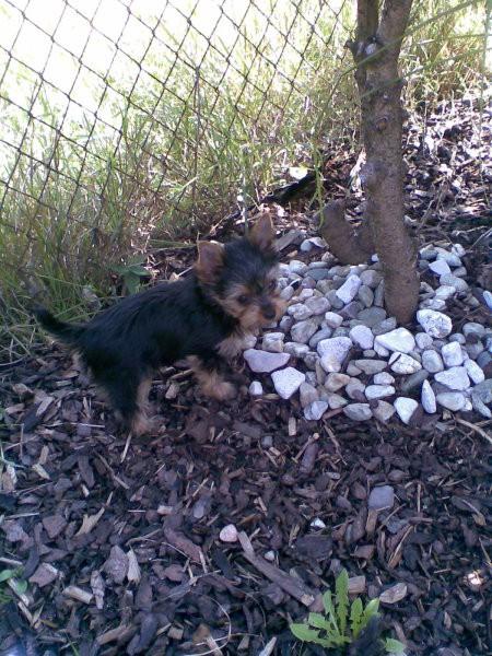 Prvič u vrtu