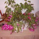 moj kaktus november 2007