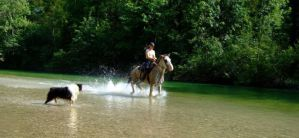 Animalish water-fun