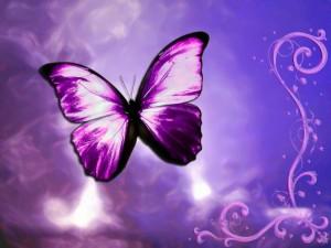 metuljcica-2001